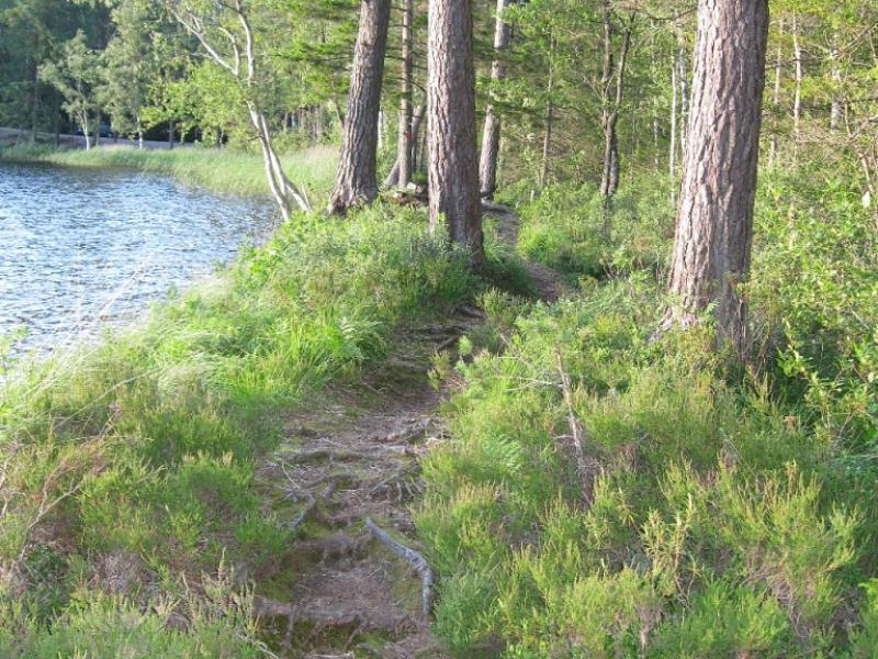 Leuke paadjes rond het Försjön