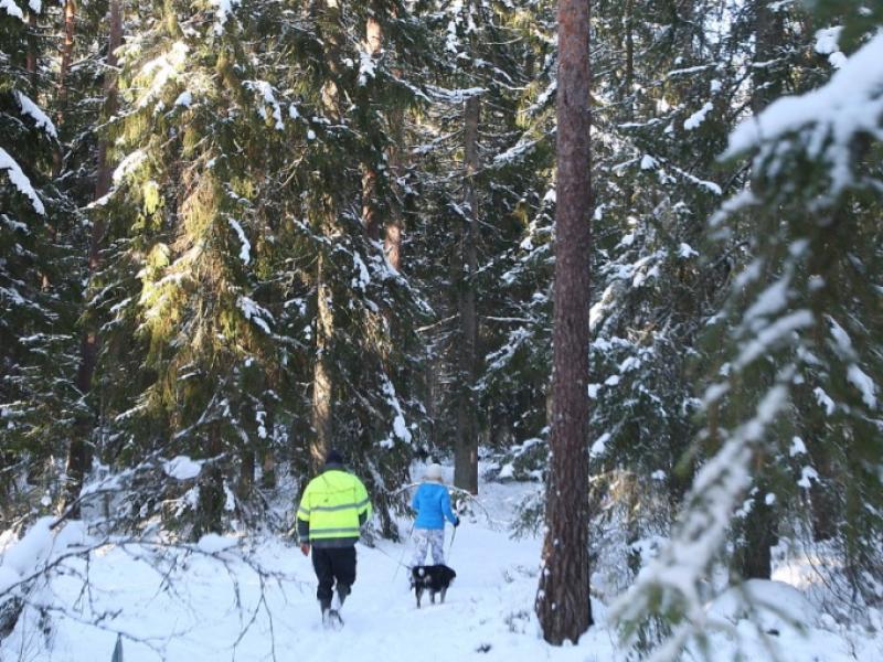 Langlaufen in het bos